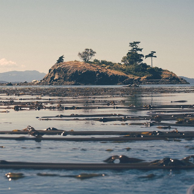 Corey Warren (@indivisualize) tells a great story from his trip to the San Juan Islands. Experience.Forsake.com #getoutthere #adventureworthy
