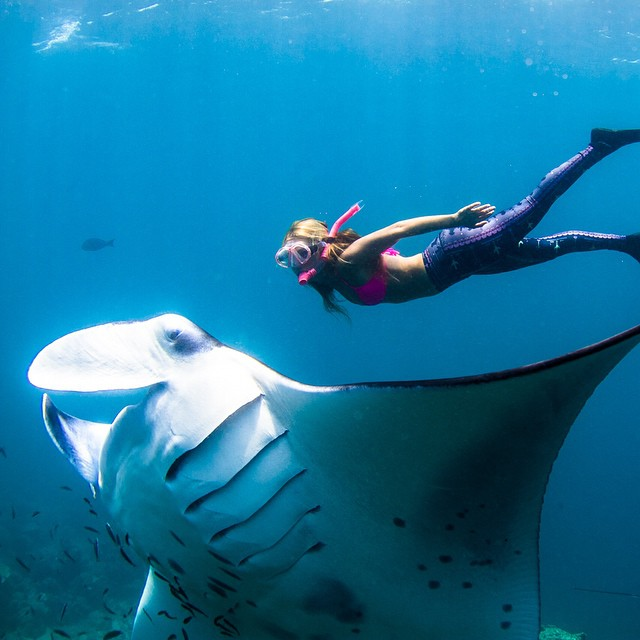 Hello there Mr. Manta! Let's keep Ba'a Atoll a biosphere reserve!!! Visit @dusitthanimv and take off on an adventure with their Sea Splash dive center to see these beautiful creatures and help protect this biosphere from disappearing!  I was lucky...