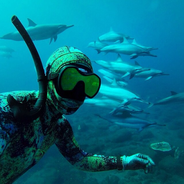 Diving with dolphins | #LifesABeach #WheresYourBeach #Kameleonz #GoPro #GoPole pic by @travis_benji