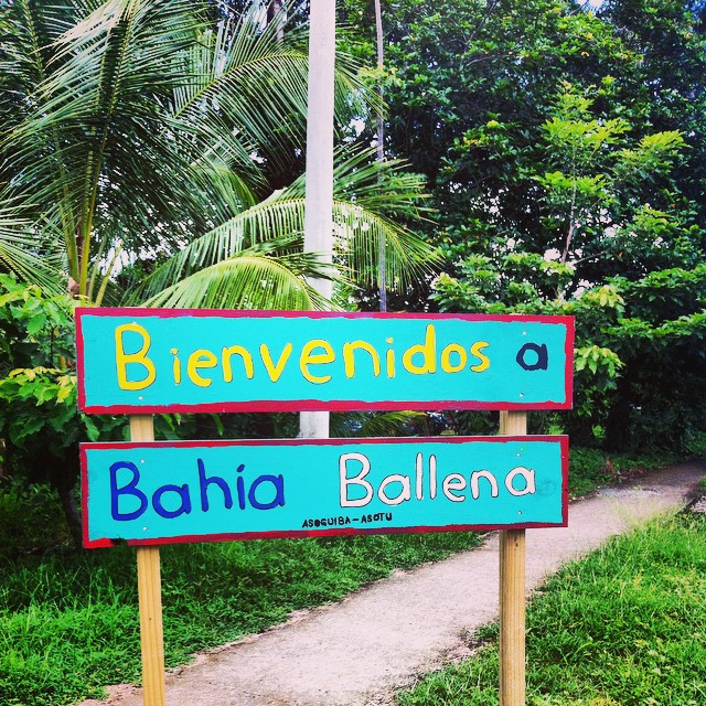 Welcome to Bahia Ballena!