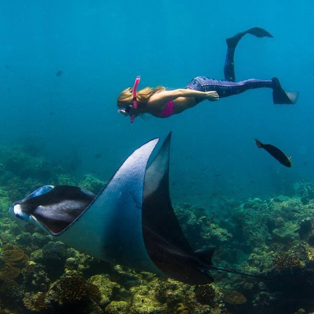 I am a little obsessed with these sea space ships.  @alisonsadventures swimming with a manta ray in the Maldives.