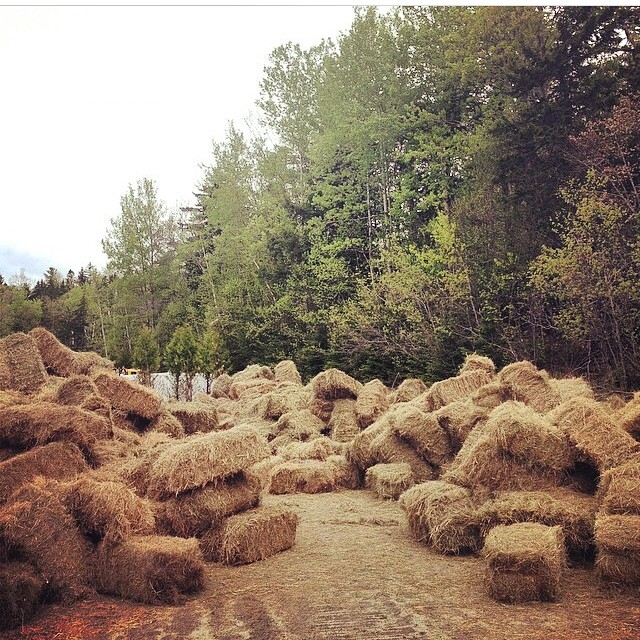 The first hay waiting to be thrown at #BurkeMt for #PCCUP #pushculture