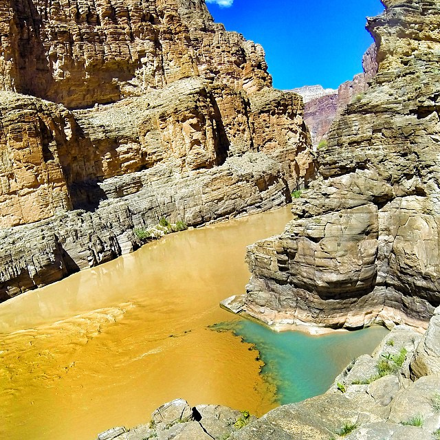 The Confluence. Where the muddy Colorado River meets the turquoise waters of Havasu Creek. Priceless.