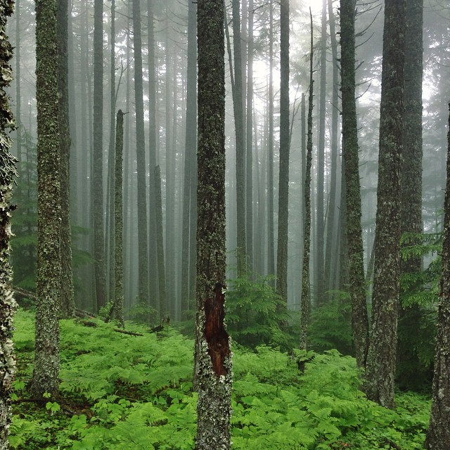 Foggy Forest Friday #FFF
