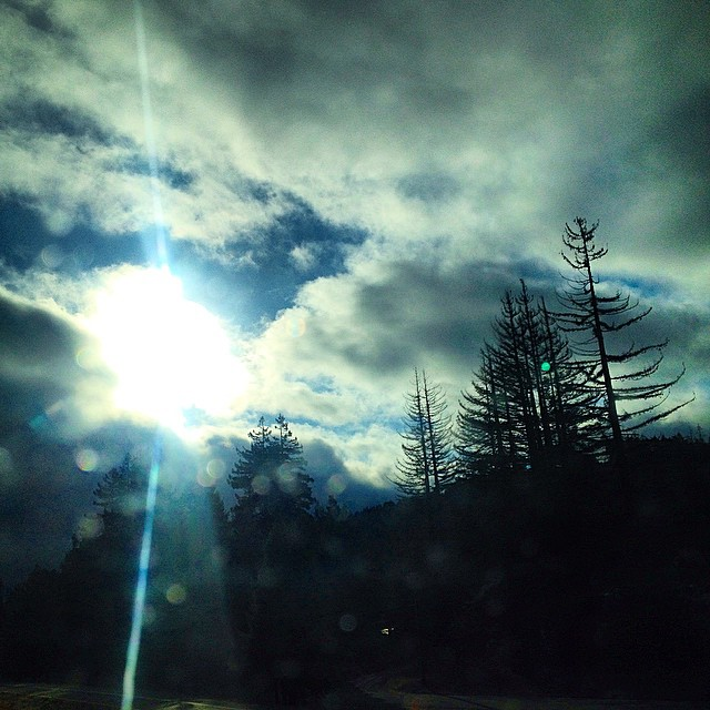Humboldt County on the 101. Always inspired by the trees up here. 9.22.14 #risedesigns #trees #redwoods