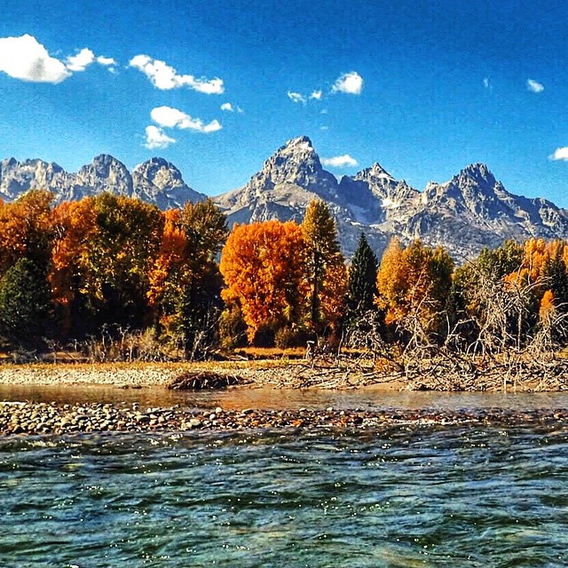 WHOOMP THERE IT IS! Fall has arrived here in #jacksonhole
