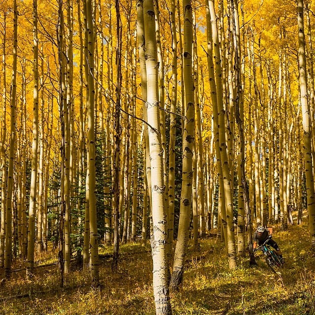 Are you ready for Fall? Beginning tomorrow we are starting a contest for the best Fall photos. We've paired up with @sunski and @greenlines to put together a sweet prize package for the winner! More details tomorrow... Until then, here's our friend...