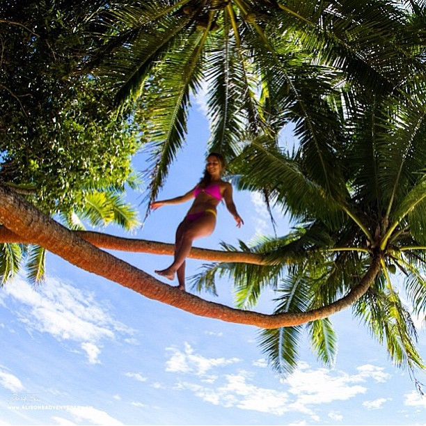 @alisonsadventures #defying #gravity taking a #walk in her #palmtree #paradise #photo #sarahleephoto