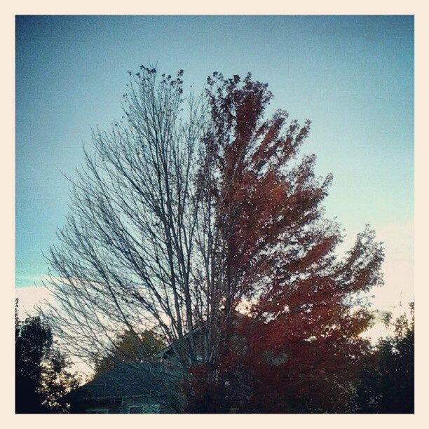 Token nature shot. 2 or 1 tree? #fall @monprimm