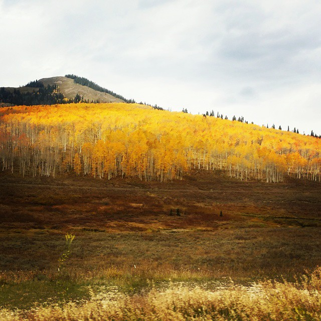 This is always such a beautiful time of the year! #fallcolors #winteriscoming #Colorado