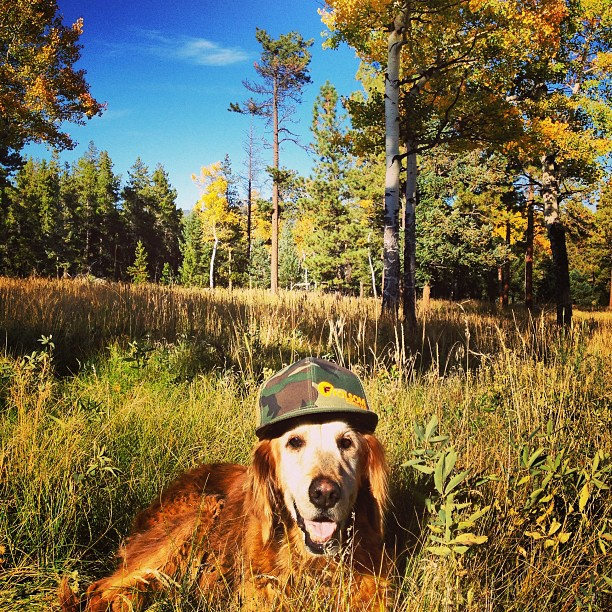 Nico dog soaking in the #fallcolors like a champ! Hope everyone had a great weekend! #nature #coloRADo #bestdogever