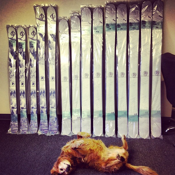 Nico dog protecting the #aspensnowmass skis!