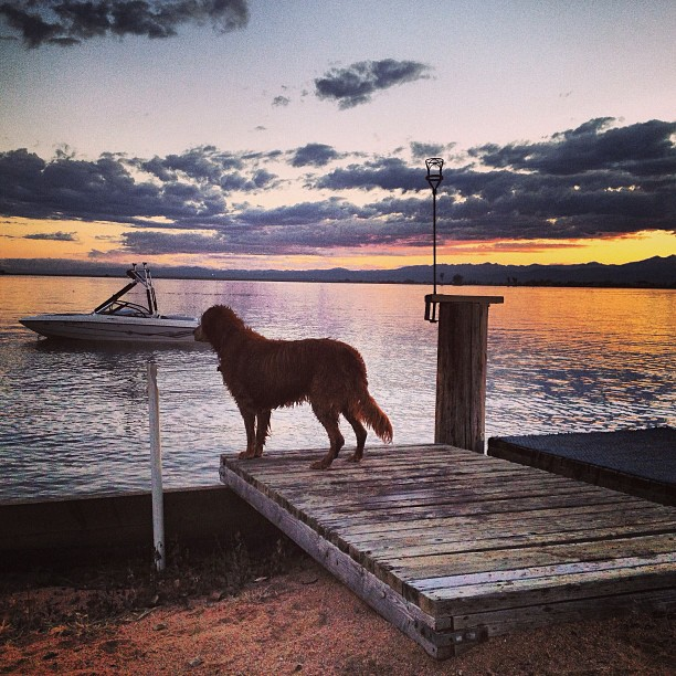 It's been a great summer... #winteriscoming #folsomskis #bestdogever
