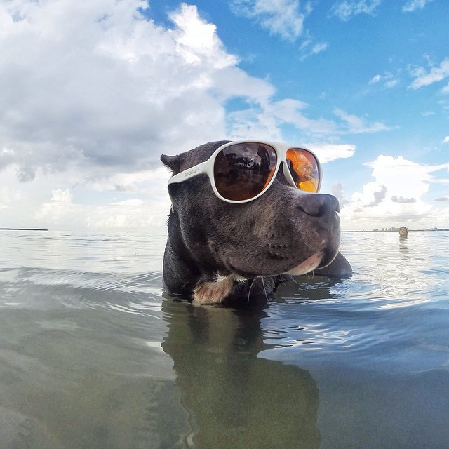 Melo enjoying a sunny day at the beach. Photo by @sup_miamigirl.