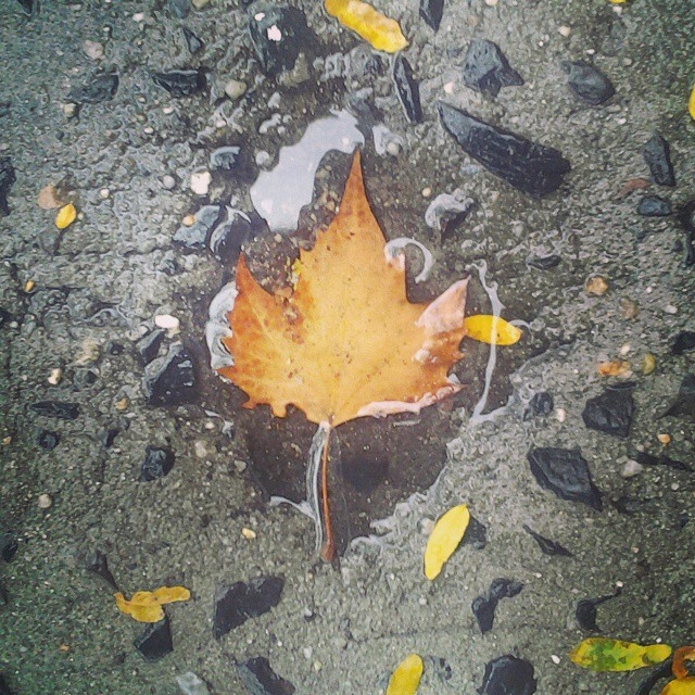 #autumnleaves #puddlepic #catchcolor