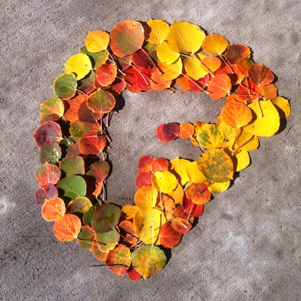 #nature loves #folsomskis too. Some aspen leaves artfully arranged by @jenny_ryden_harris
