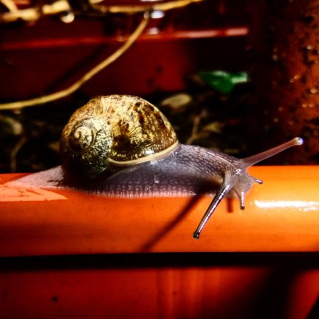 #macro #snail #rain #caracol #sanisidro #buenosaires #argentina