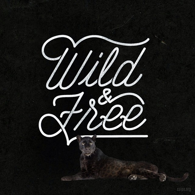 Stay wild, #saverainforest.