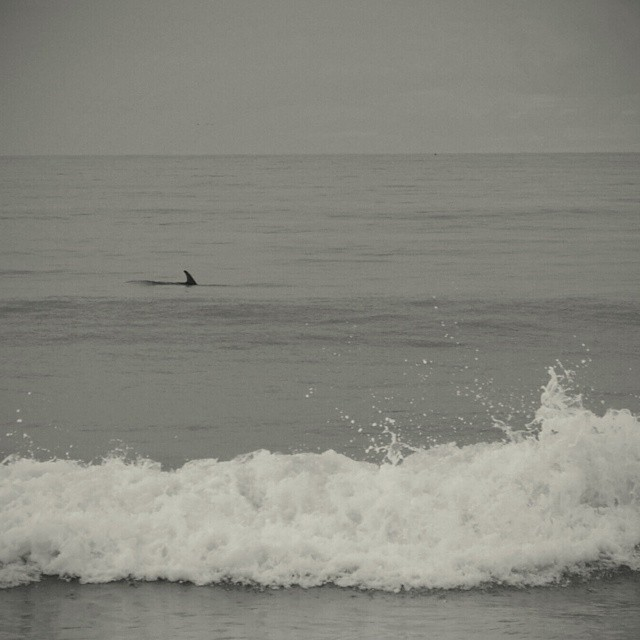 #AkelaSurf  Surfing with dolphins