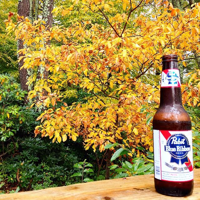 Fall // Boone, NC //
