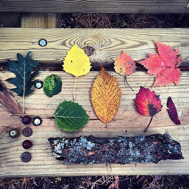 Fall foraging finds from @mentalpaint, reminders to go for a wander in the woods #allswell
