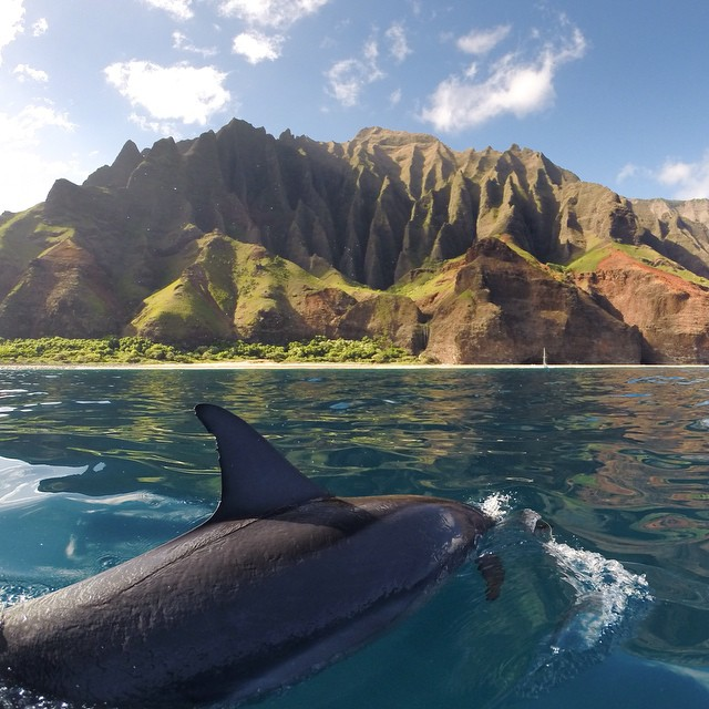 Photo of the Day! A spinner #dolphin takes in the beauty of the Napali Coast on Kauai. Photo by @Hidrivephoto.
