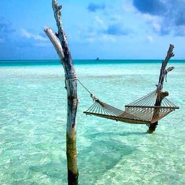 Tropical Daydreams...