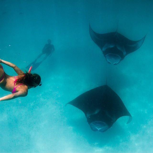 Oh hey manta ray