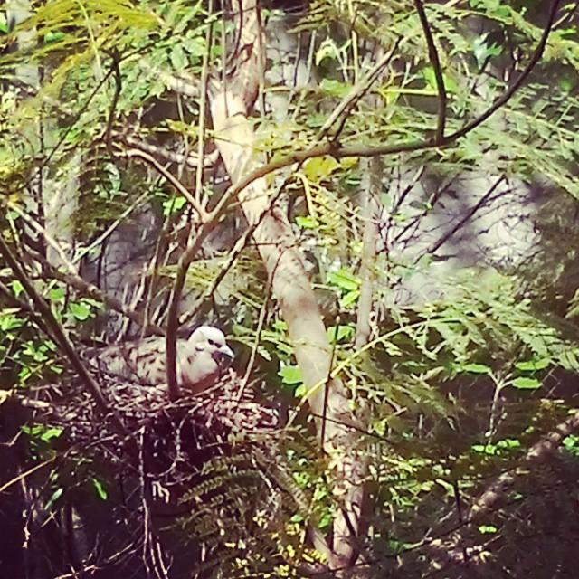 Nos cuidaron como ésta paloma cuida su nido.., Felíz día mamacitas!