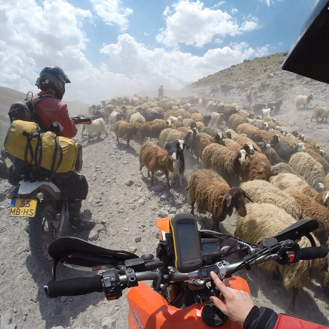 Photo of the Day! Ramon Marcelis encounters an unusual roadblock while traveling through Iran. #roadtrip