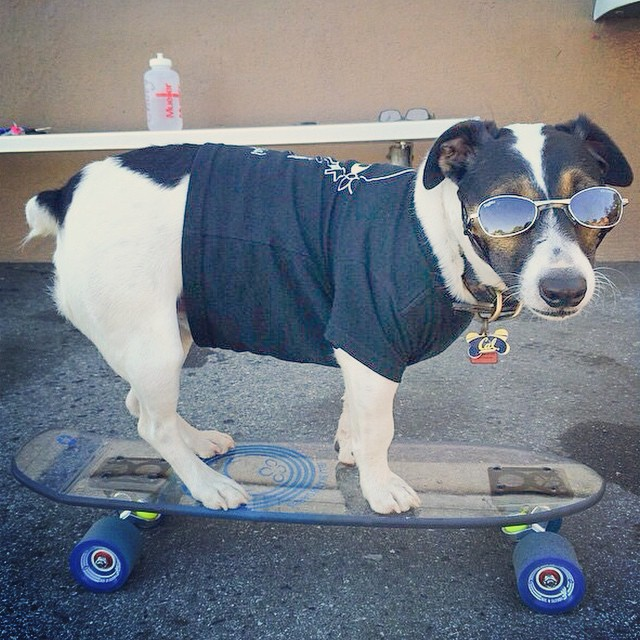 Happy Tuesday from @superchuey! He's a #cali #shredder fur sure