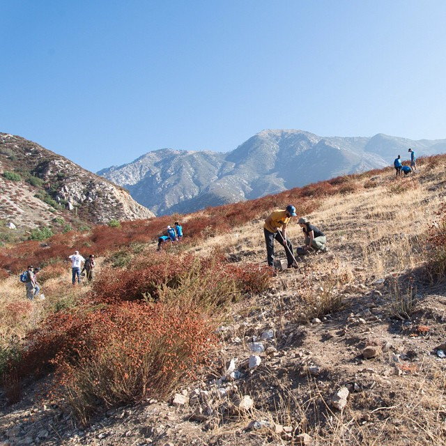 Big thanks to all the #radparks volunteers who helped us plant 150 Jeffrey pines in the San Gabriel Mountains last weekend! Check out our Field Notes for more photos from the event. (Link in profile) #leaveitbetterthanyoufoundit #stewardsofparks