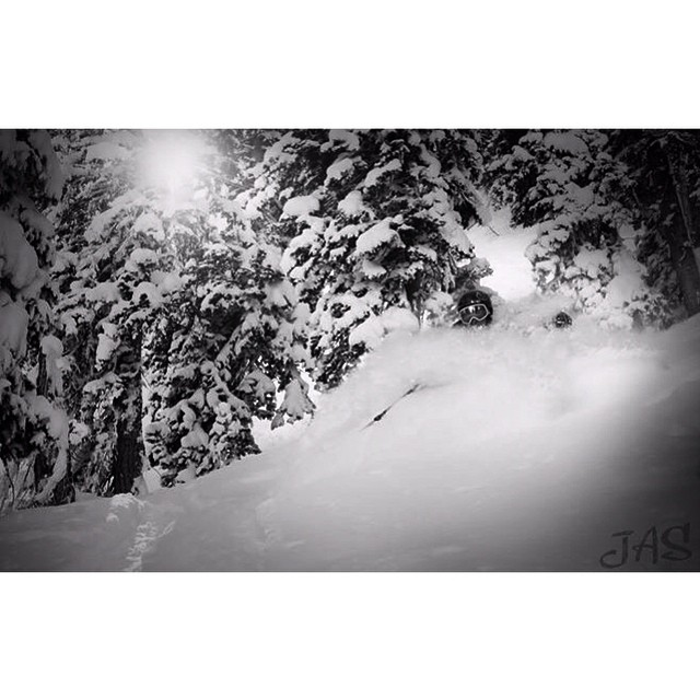 Less than a month until we are getting pitted @snowbird #kittenfactory #superpitted #tigertail #jasprotographer