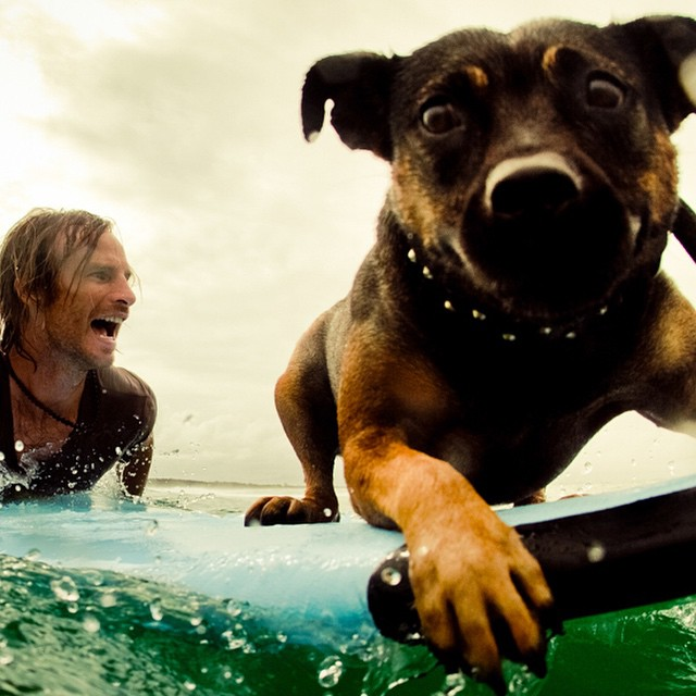 Doggy style surfing with Pepper!  Photo by @hisarahlee