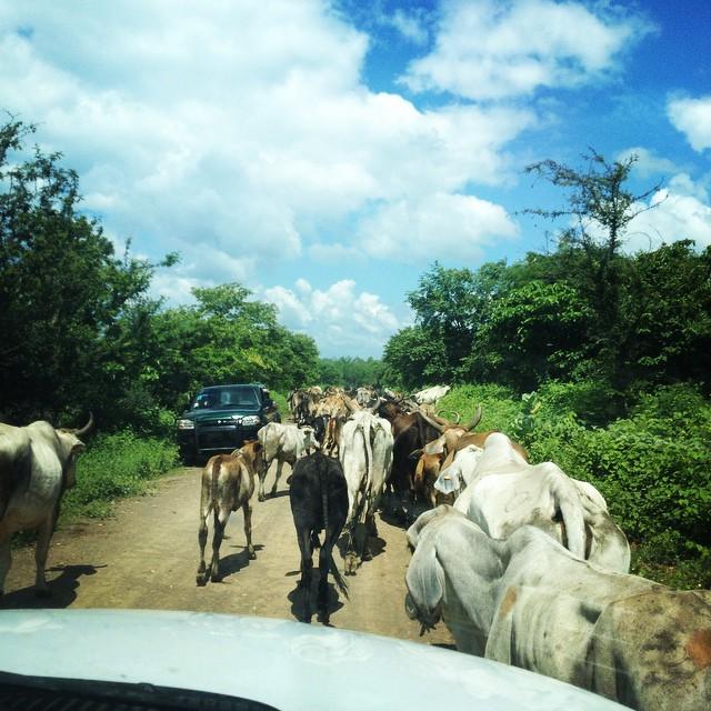 Nicaragua traffic!