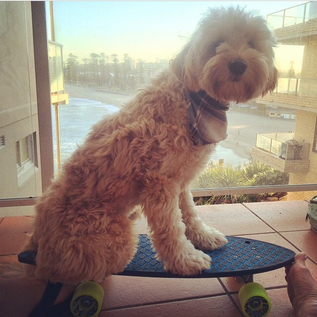 Rufus is ready for the weekend! Happy cruising from @heidistacey down in Australia!