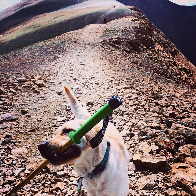 Panda durability test #0036527: Dog Exposure  Results: Pass  Repost from @jlindsay10  #MagicSkiWands