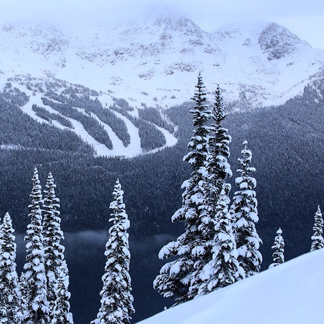 Whistler/Blackcomb gets dumped on. Whiter is here! ❄️