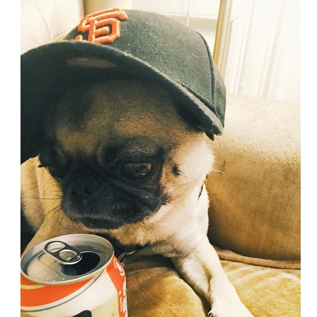 Tied up! Let's go #Giants! #worldseries #sanfrancisco #partypug