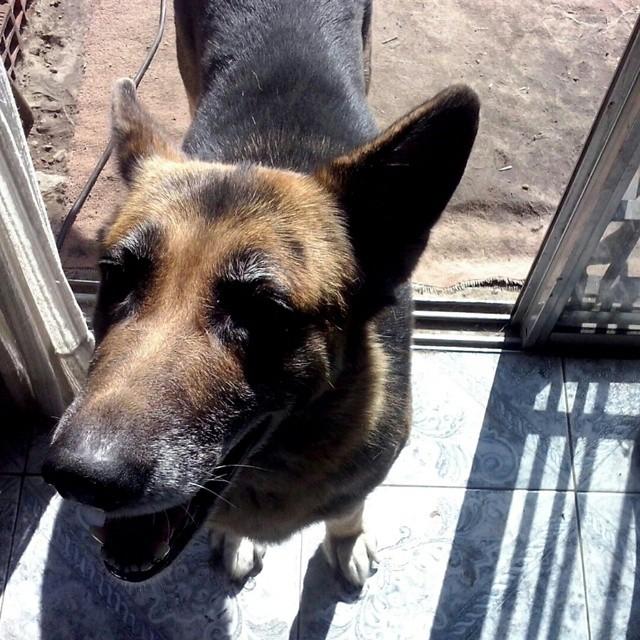 .Un beso y adios.  #amarte #toda #la #vida #pet #dog #perro #friend #bbf #rip