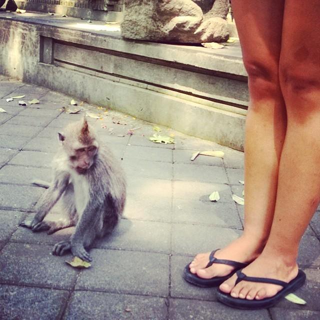 Monkey see monkey want