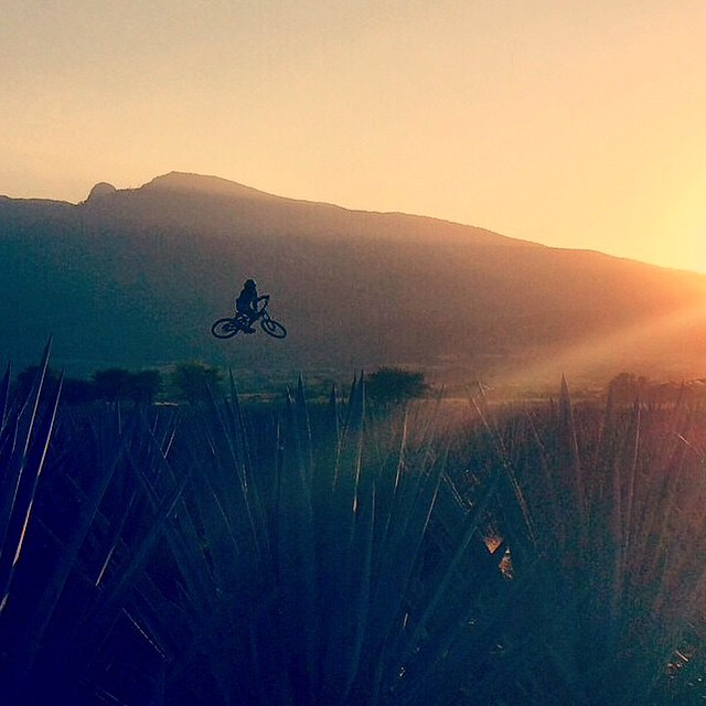 There are many different ways to enjoy a Tequila Sunrise.  Regram: @AntoineBizet | Whipping it in the Agaves! Cool shooting for @altiusevent | #DH #Whip #Agave #Tequila