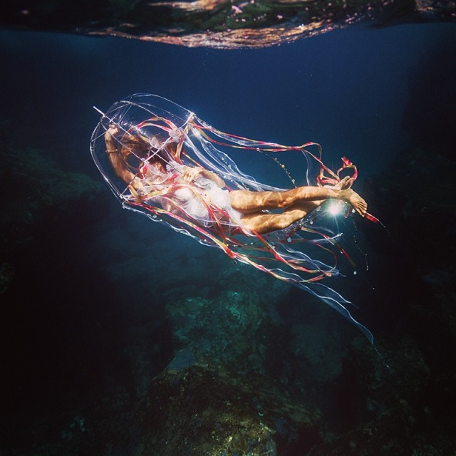Jellyfish.  #sarahleephoto #jellyfish #underthesea