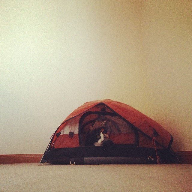 exhibit h: cat in tent.