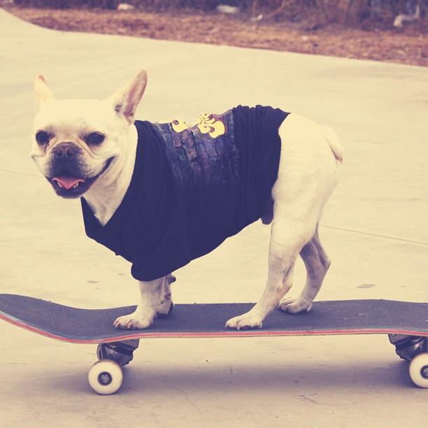 Winston is so Flipside Fresh! 2013 FSF LookBook #fsf #flipsidefresh #skateboard #skatepark #goodpeople