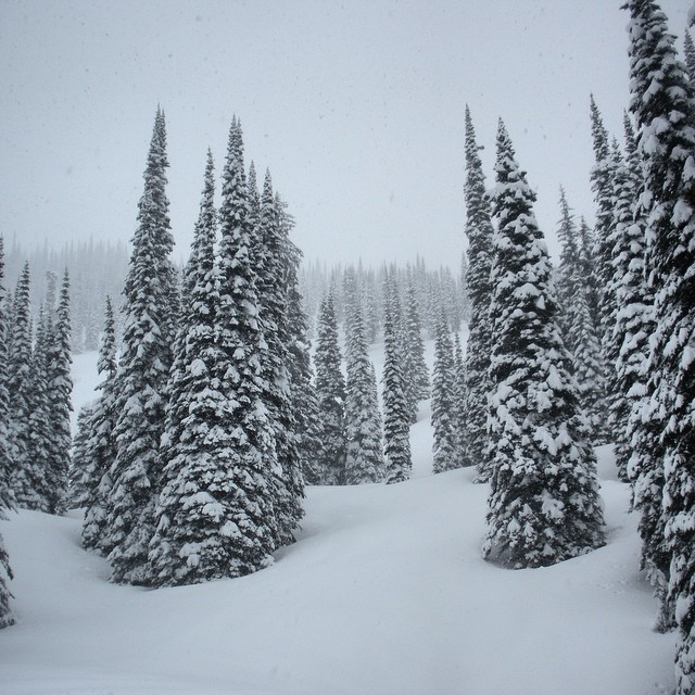 Untouched tree skiing... okay.  PC: @robbiemassie @islandlakelodge
