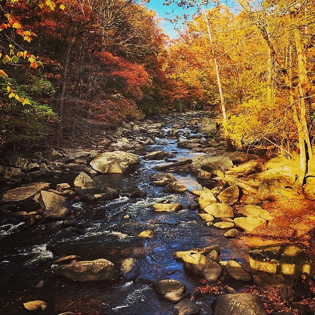 Stunning fall colors in Rock Creek Park by @sta296! #radparks