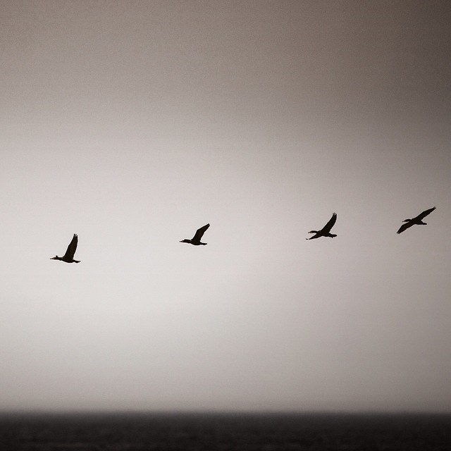 While we wait for waves...#flat #birds #coldwatersurf #newengland #canon #5d #ocean