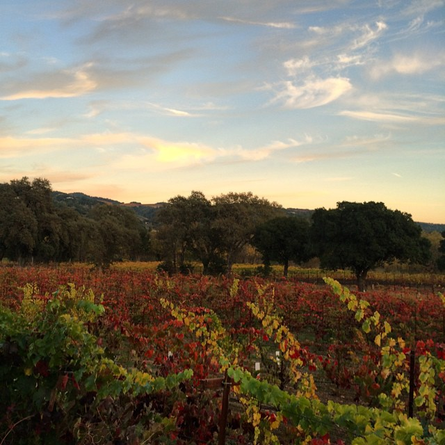 #sunset from #sonoma tonight. #julesandclay #fall #vineyard #winery