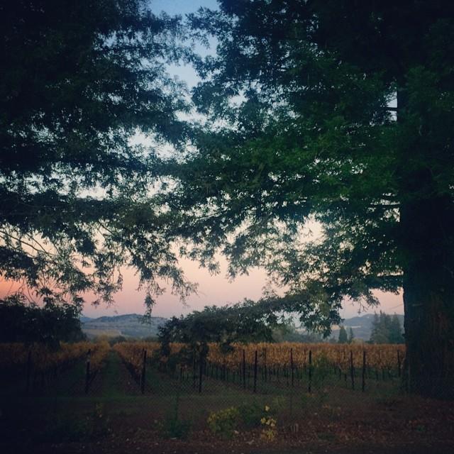 Goodnight Napa. #napa #vineyard #california
